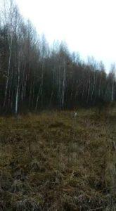 охота фазанов подмосковье фото №57