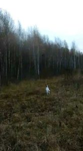 охота фазанов подмосковье фото №58