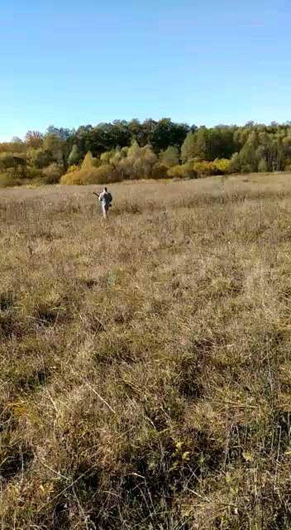 охота фазанов подмосковье фото №60