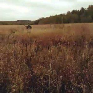 охота фазанов подмосковье фото №61