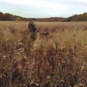 охота фазанов подмосковье фото №62
