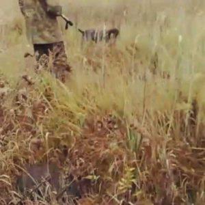 охота фазанов подмосковье фото №63