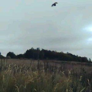 охота фазанов подмосковье фото №66