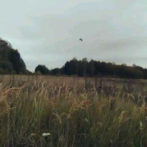 охота фазанов подмосковье фото №67