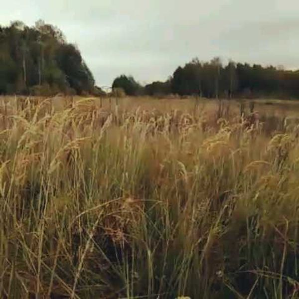 охота фазанов подмосковье фото №68