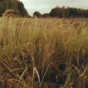 охота фазанов подмосковье фото №69