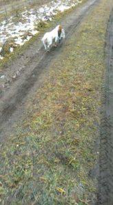 охота фазанов подмосковье фото №70