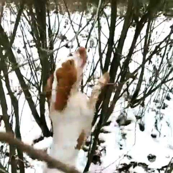 охота фазанов подмосковье фото №71
