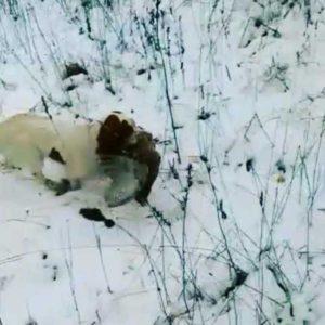 охота фазанов подмосковье фото №76