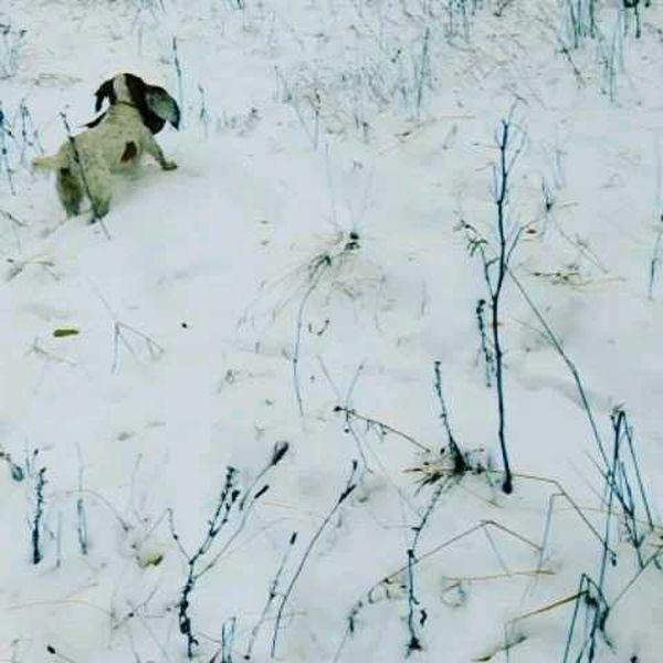охота фазанов подмосковье фото №77