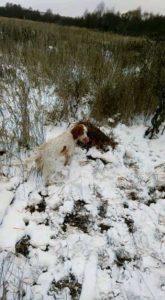 охота фазанов подмосковье фото №80