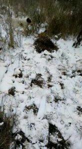 охота фазанов подмосковье фото №81