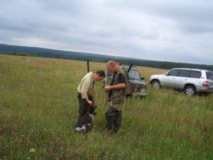 охота фазанов подмосковье фото №84