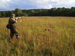 охота фазанов подмосковье фото №86