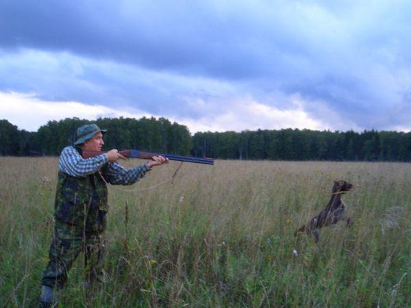 охота фазанов подмосковье фото №89