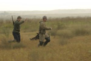 охота фазанов подмосковье фото №9
