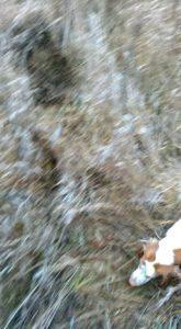 охота фазанов подмосковье фото №91
