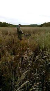 охота фазанов подмосковье фото №92
