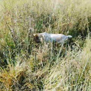 охота фазанов подмосковье фото №95