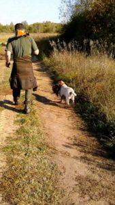 охота фазанов подмосковье фото №98