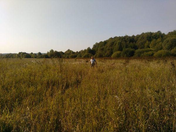 Охота на фазана в Подмосковье фото №426