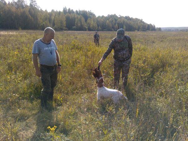 Охота на фазана в Подмосковье фото №427