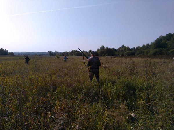 Охота на фазана в Подмосковье фото №432