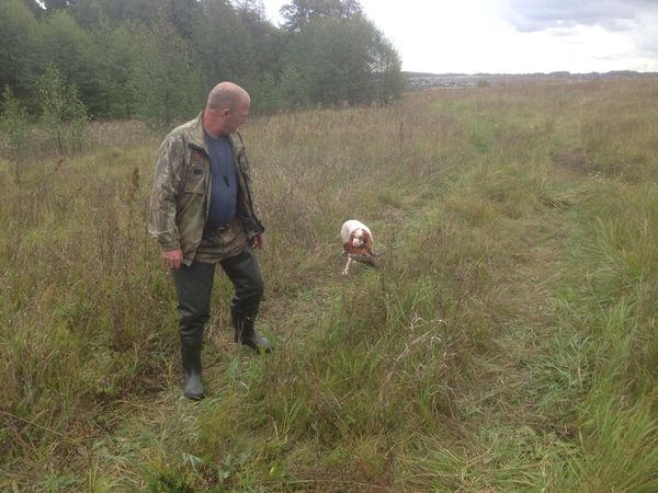 Охота на фазана в Подмосковье фото №441