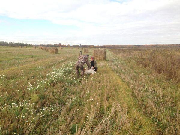 Охота на фазана в Подмосковье фото №454