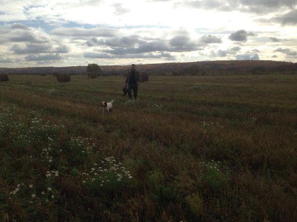 Охота на фазана в Подмосковье фото №458