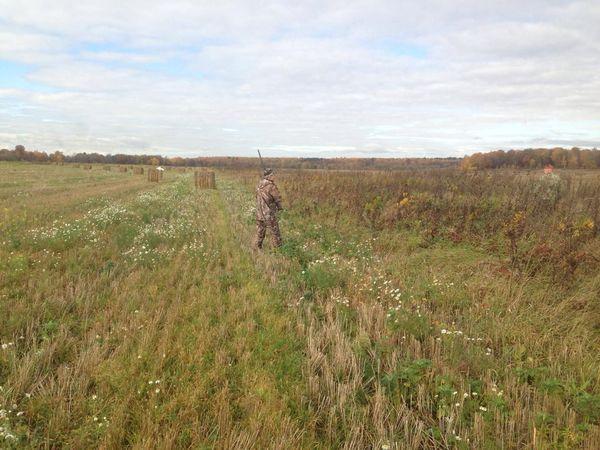 Охота на фазана в Подмосковье фото №459