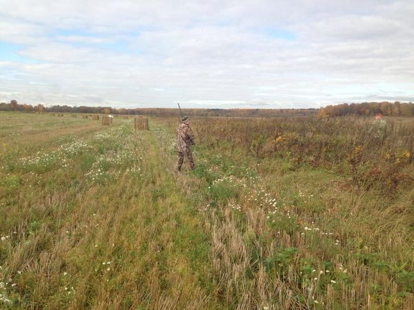 Охота на фазана в Подмосковье фото №460