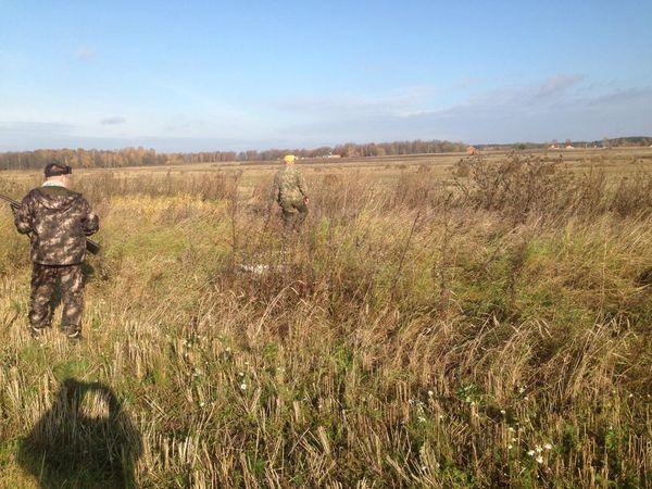 Охота на фазана в Подмосковье фото №462