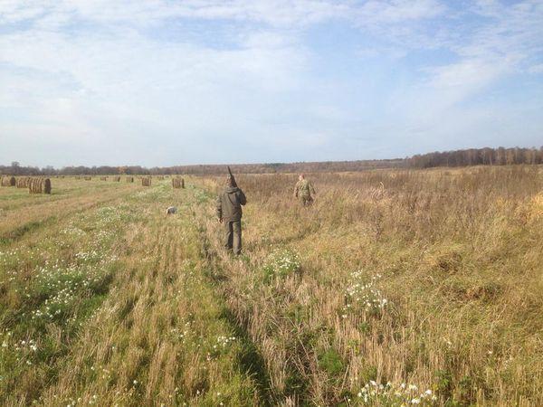Охота на фазана в Подмосковье фото №465