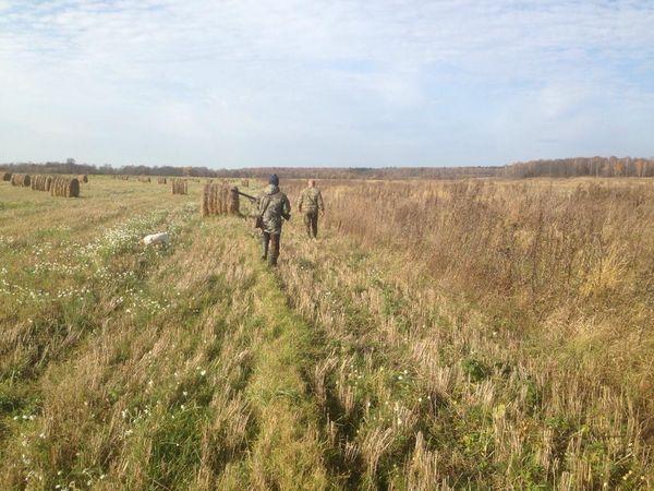 Охота на фазана в Подмосковье фото №469