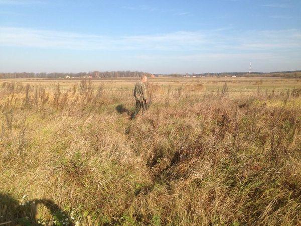 Охота на фазана в Подмосковье фото №474