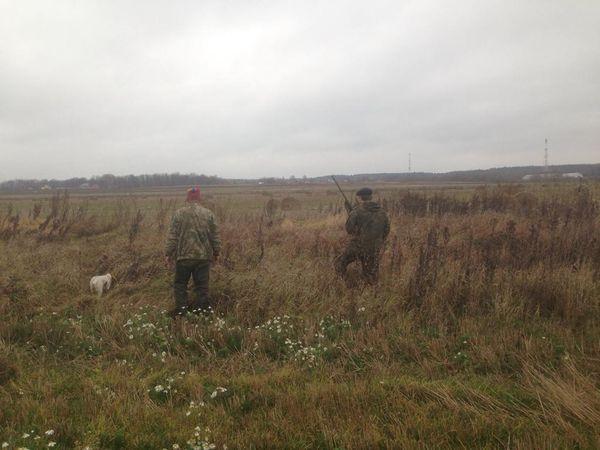 Охота на фазана в Подмосковье фото №481