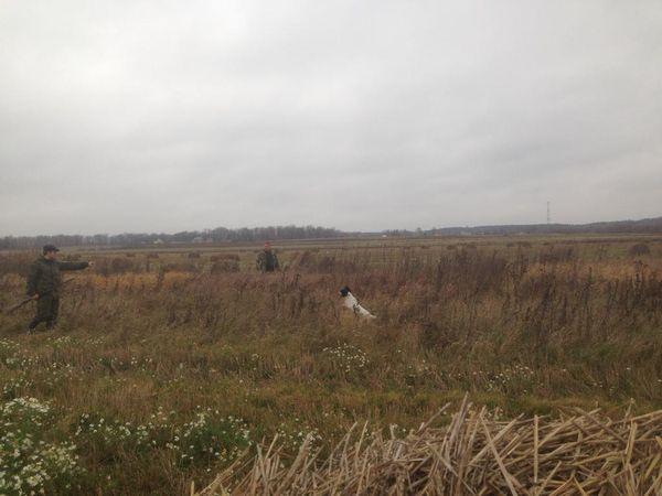 Охота на фазана в Подмосковье фото №486