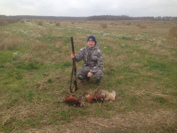 Охота на фазана в Подмосковье фото №489