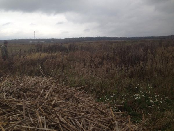 Охота на фазана в Подмосковье фото №492