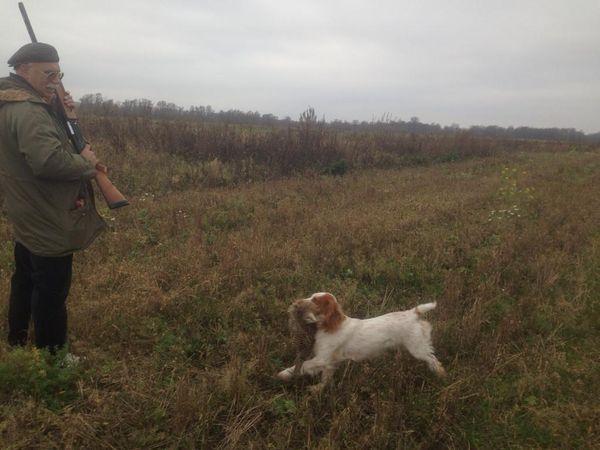 Охота на фазана в Подмосковье фото №501