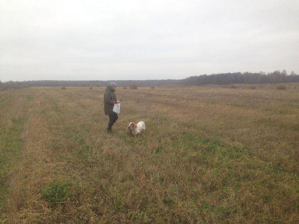 Охота на фазана в Подмосковье фото №502