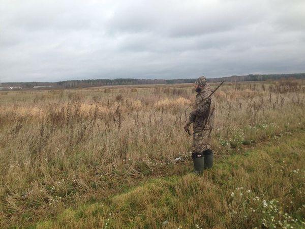 Охота на фазана в Подмосковье фото №512