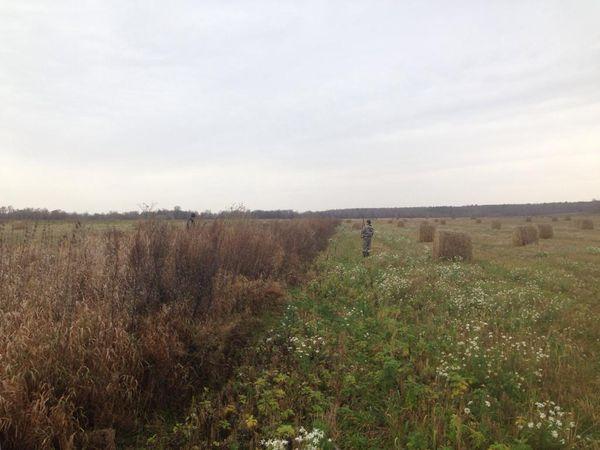 Охота на фазана в Подмосковье фото №522