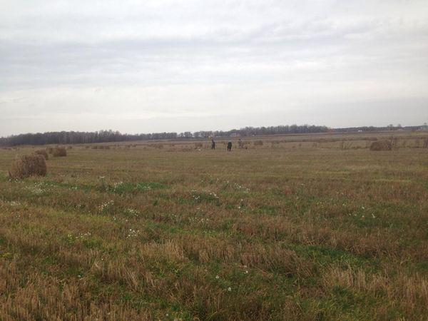 Охота на фазана в Подмосковье фото №523