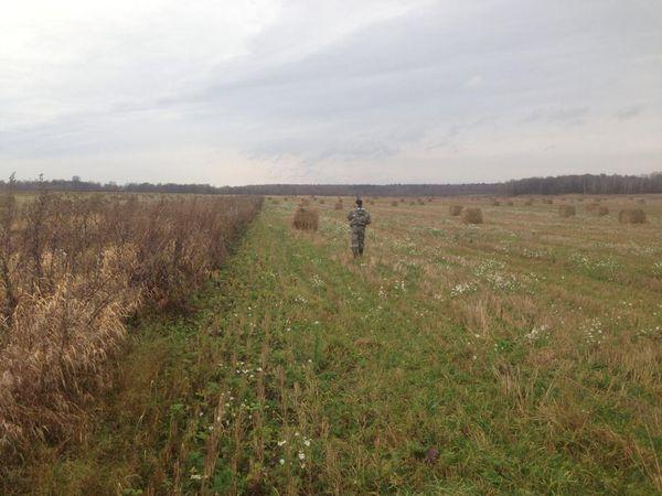 Охота на фазана в Подмосковье фото №524