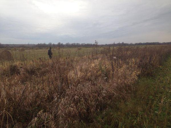 Охота на фазана в Подмосковье фото №525