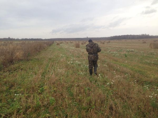 Охота на фазана в Подмосковье фото №526