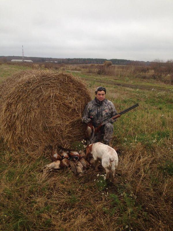 Охота на фазана в Подмосковье фото №535
