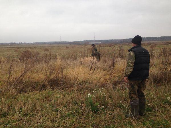 Охота на фазана в Подмосковье фото №542